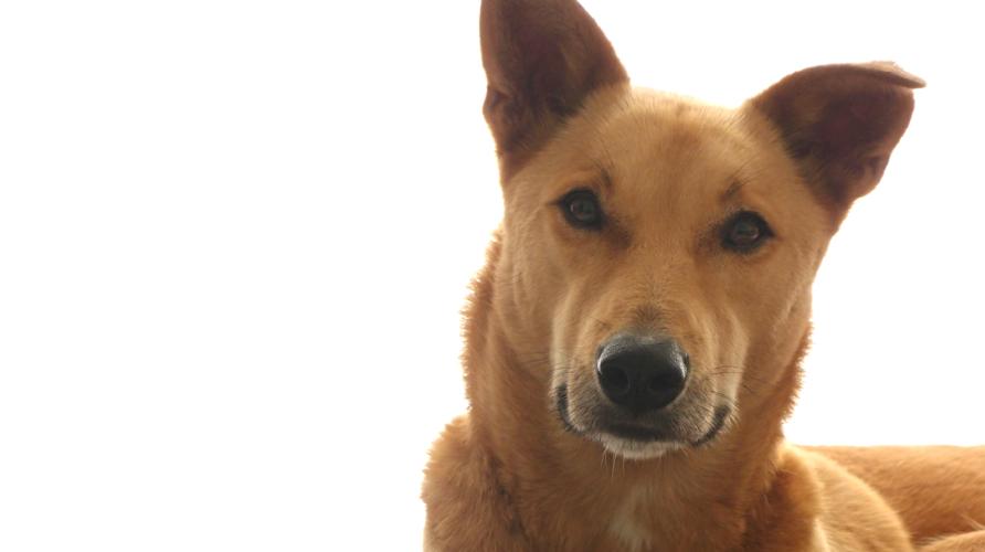 leinenlos hundebetreuung